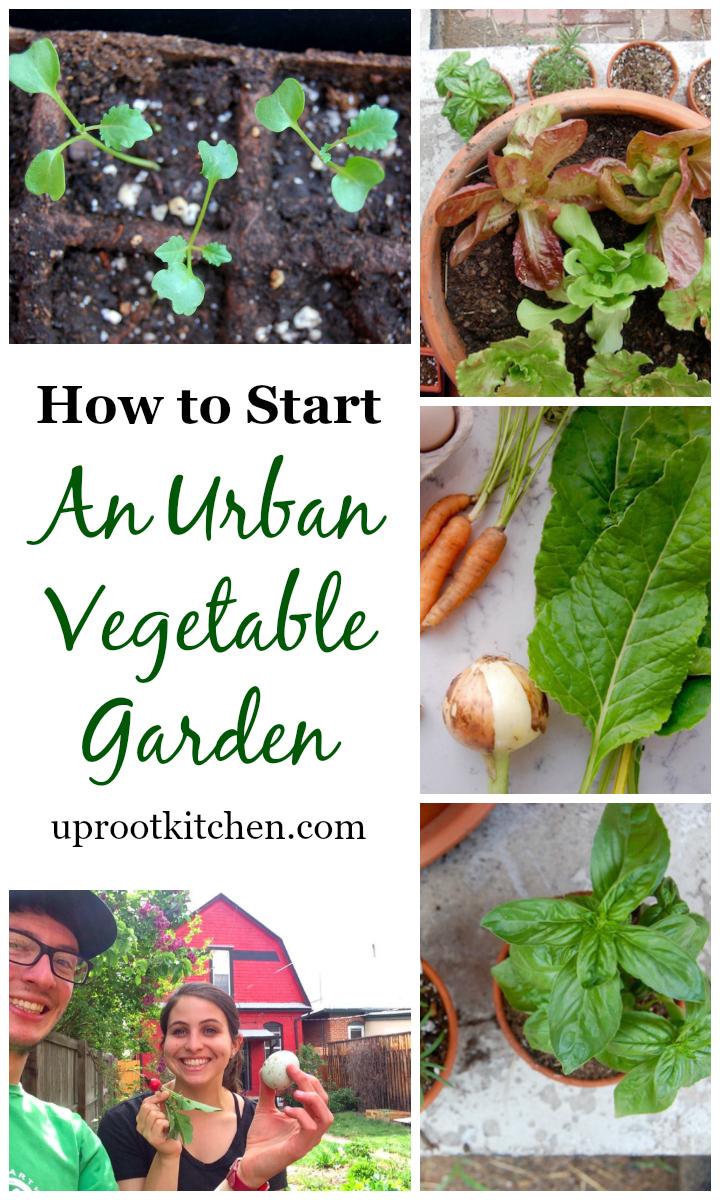 starting an urban vegetable garden photo - 4