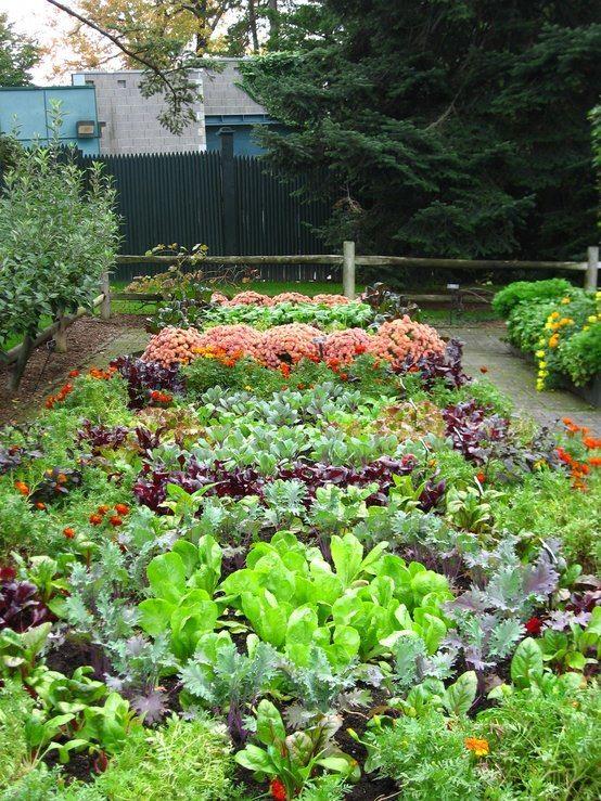 starting an urban vegetable garden photo - 5