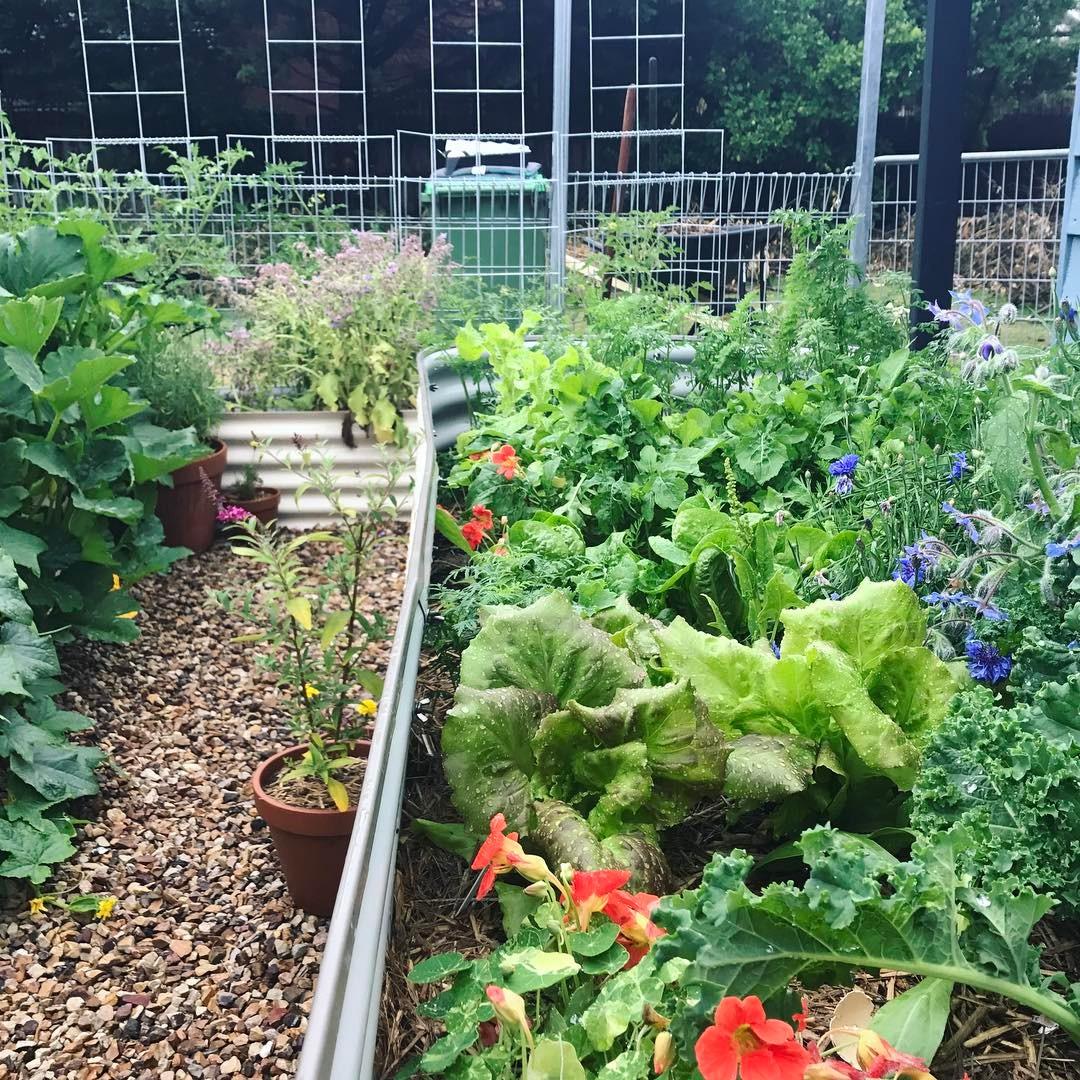starting an urban vegetable garden photo - 6
