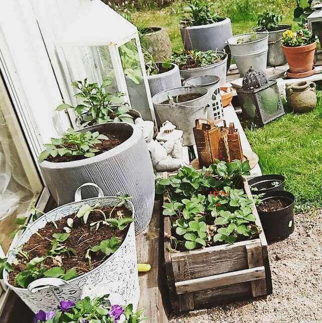 starting an urban vegetable garden photo - 8
