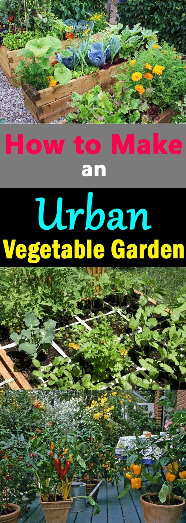starting an urban vegetable garden photo - 9