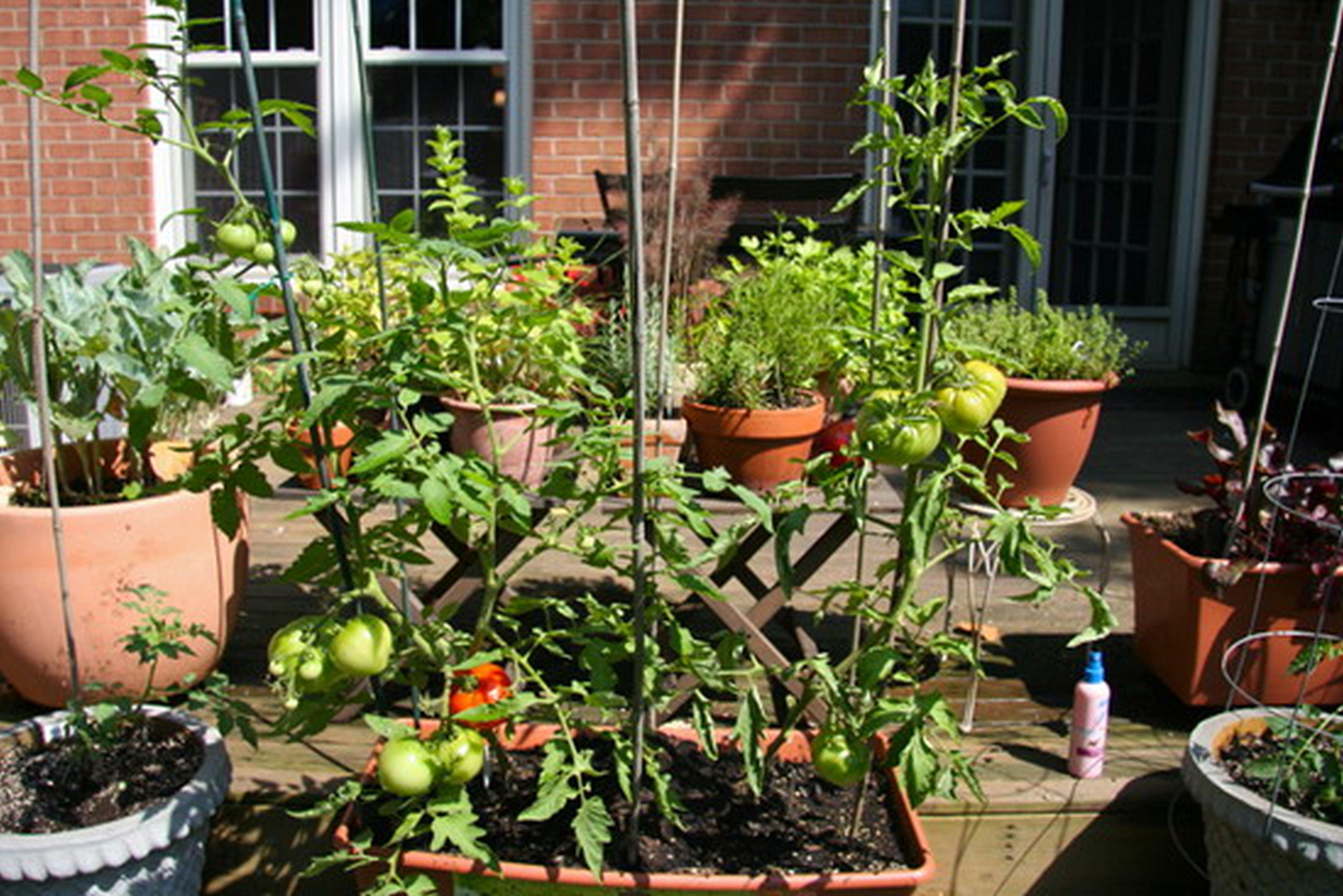 Urban Deck Vegetable Garden Photo   1