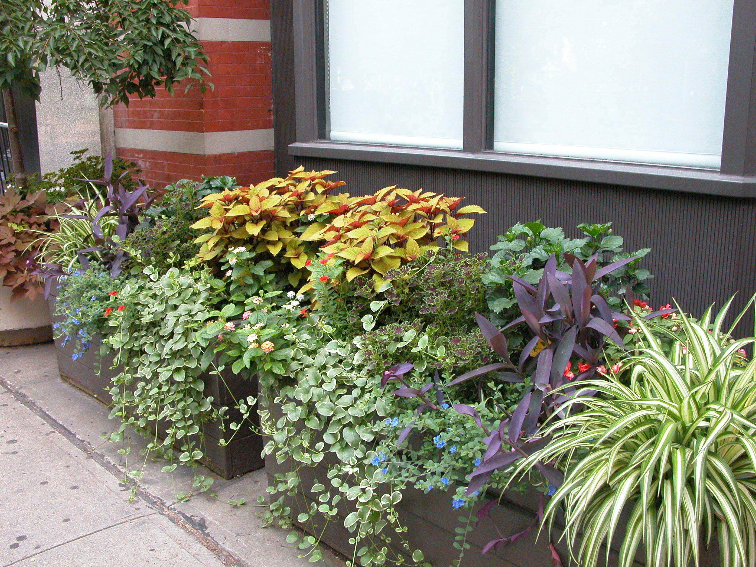 urban vegetable garden plans photo - 10