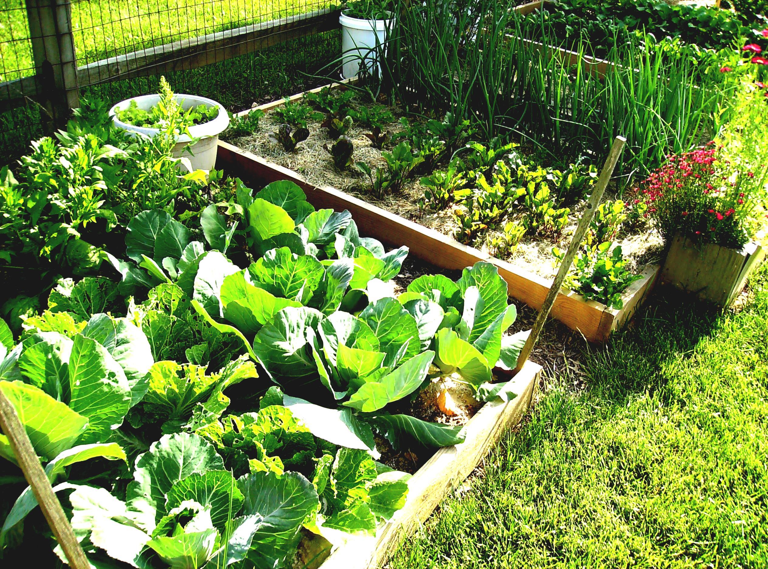 urban vegetable garden plans photo - 2
