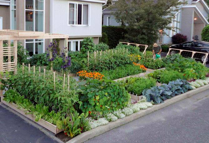 urban vegetable garden plans photo - 5