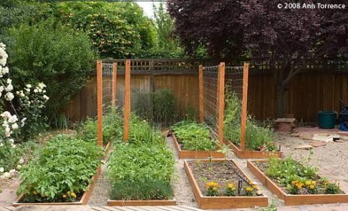 urban vegetable garden plans photo - 8
