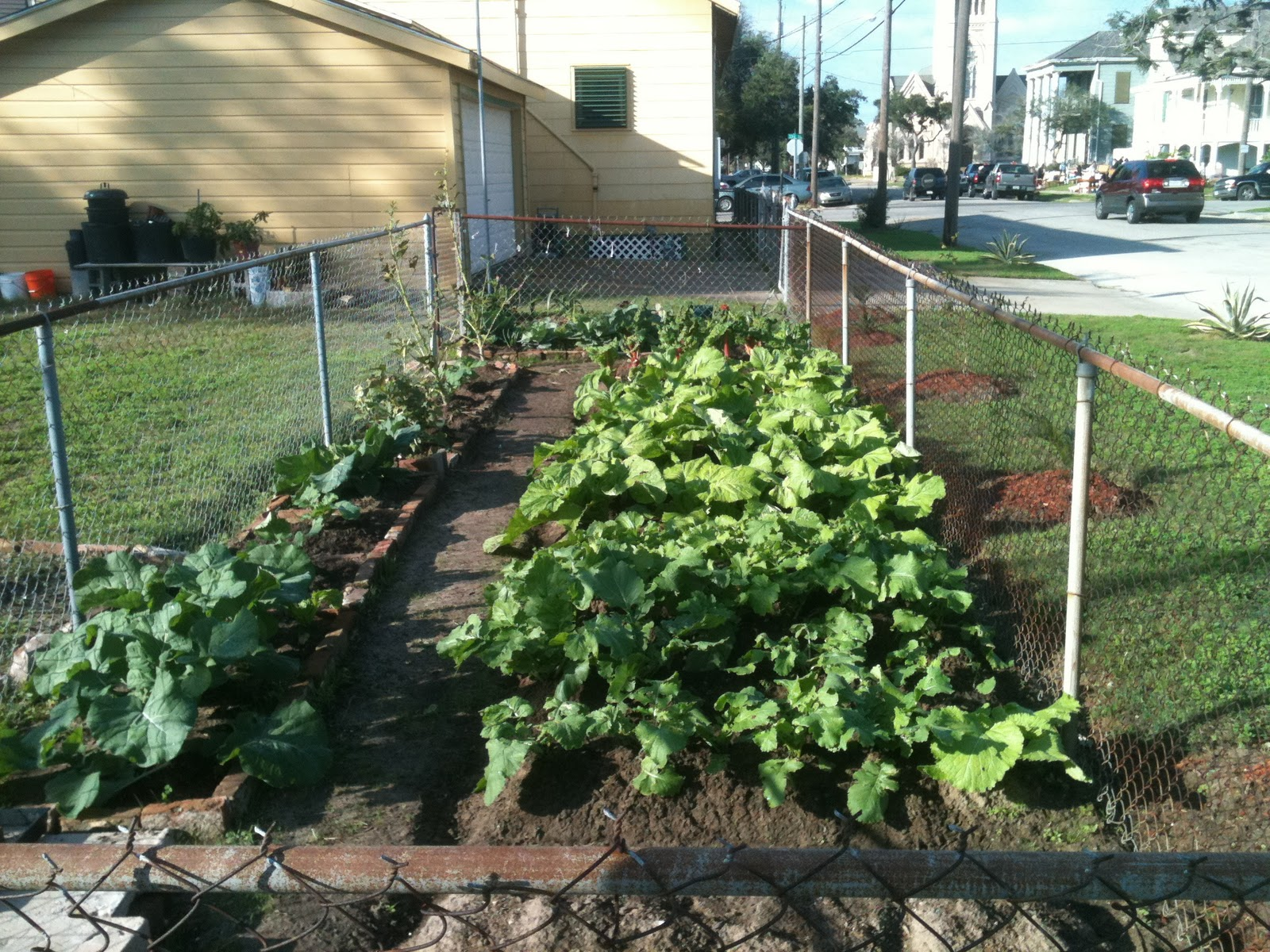urban vegetable gardening ideas photo - 10
