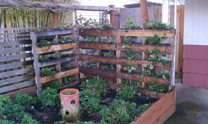 urban vegetable gardening ideas photo - 4