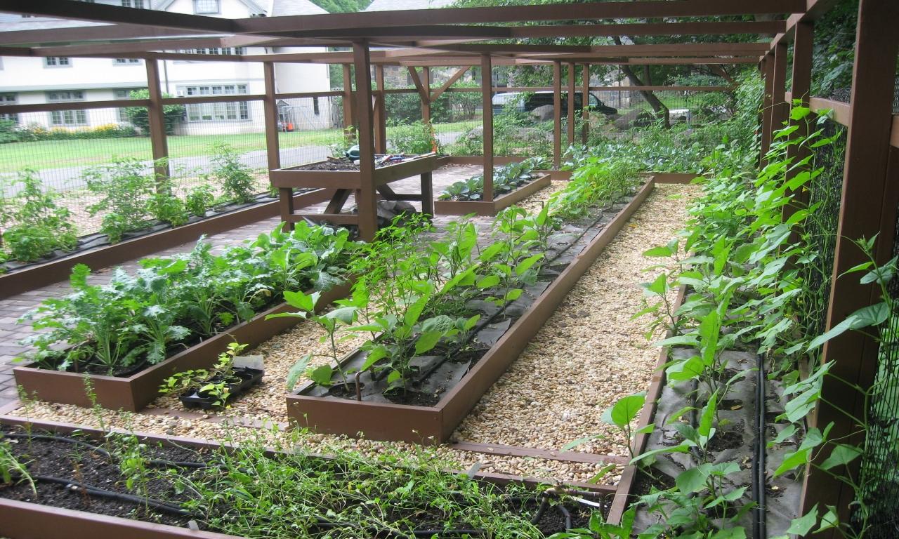 urban vegetable gardening ideas photo - 8