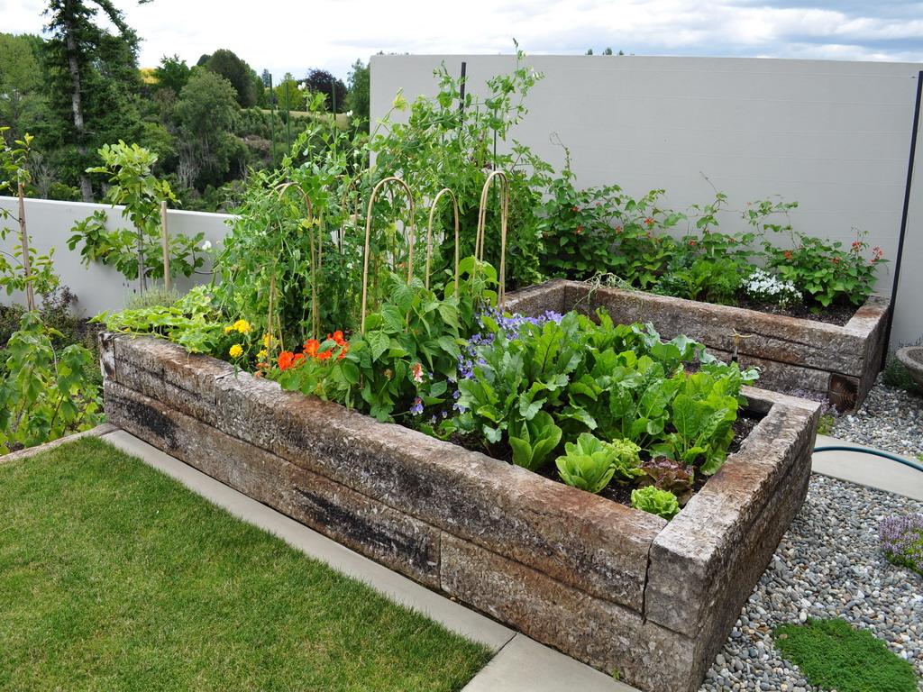 vege garden design ideas photo - 4