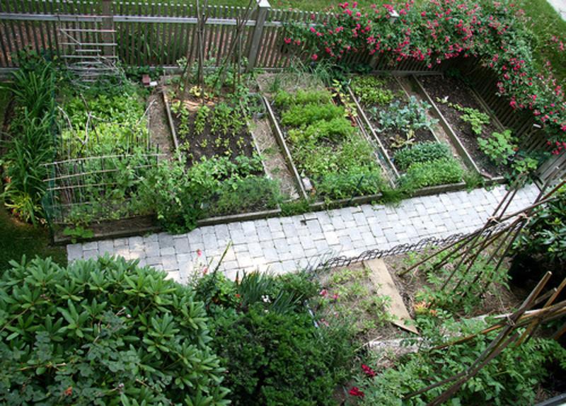 vege garden design ideas photo - 7