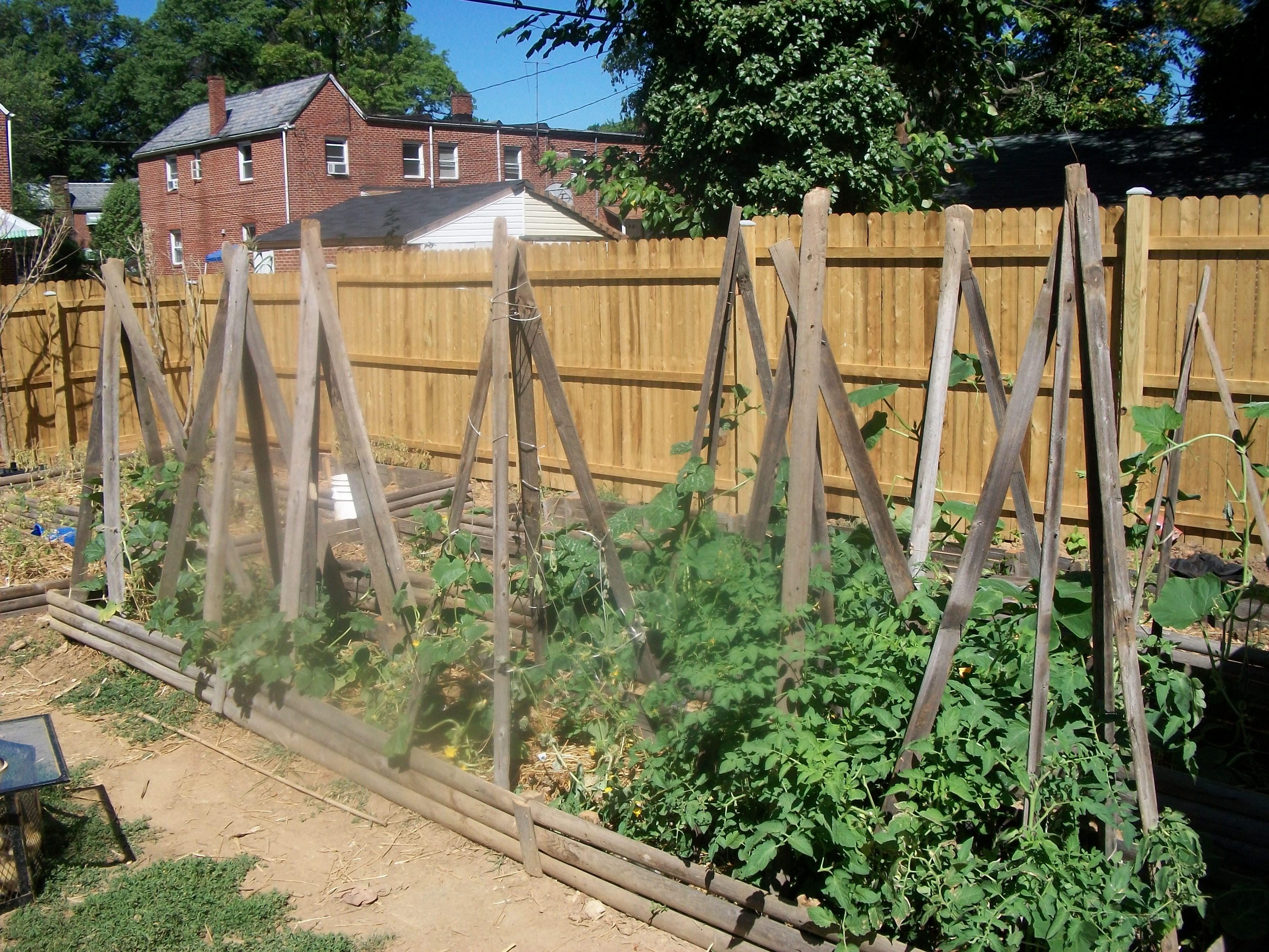 Vegetable Garden Against Fence Hawk Haven