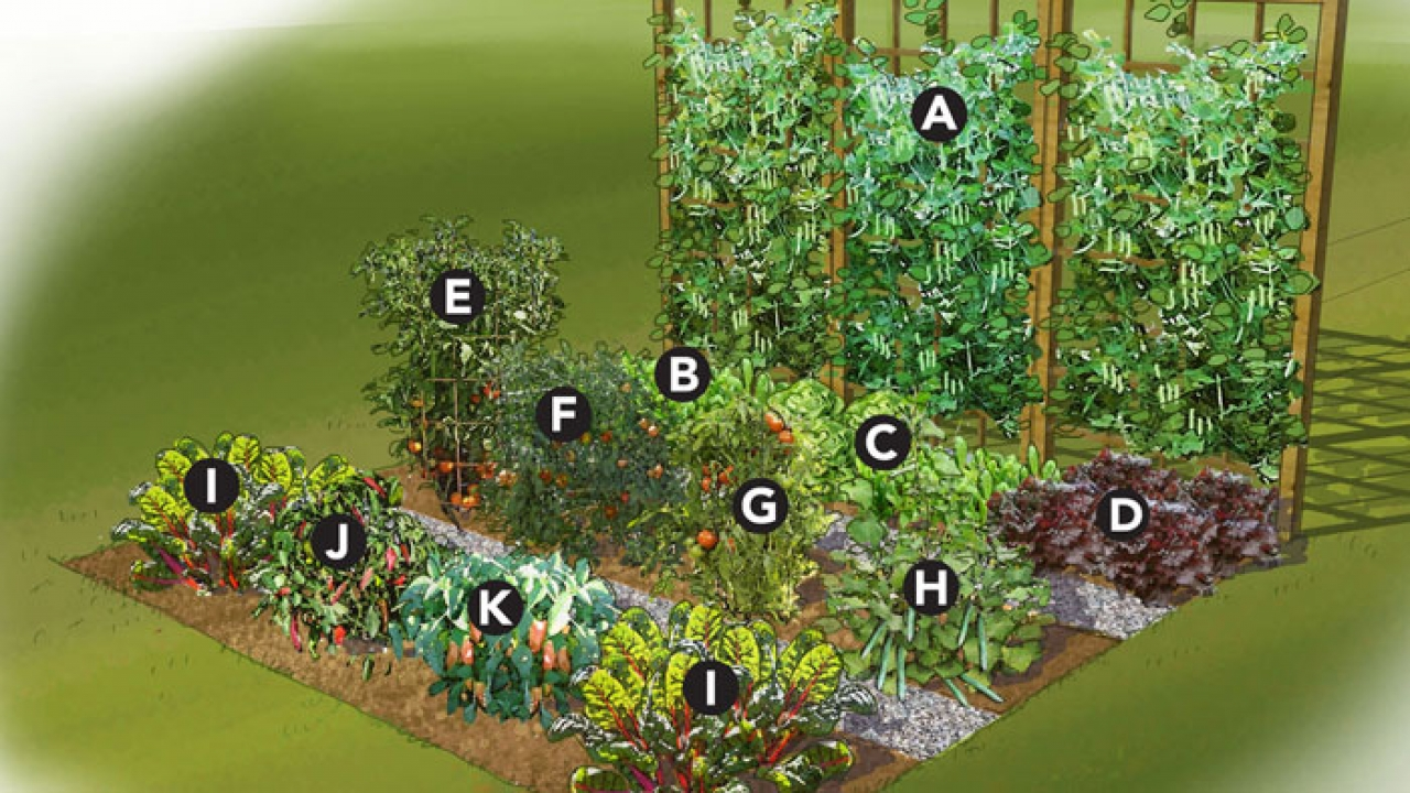 vegetable garden blueprints photo - 2