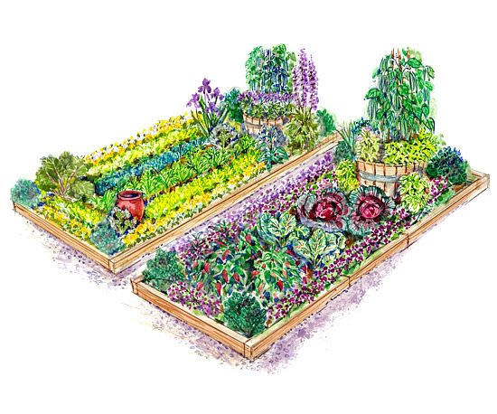 vegetable garden blueprints photo - 4