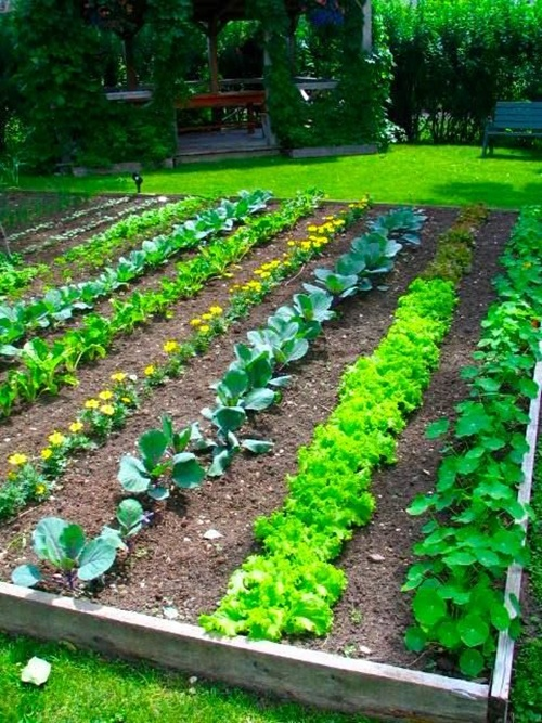 vegetable garden borders photo - 1