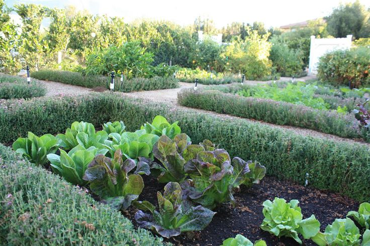 vegetable garden borders photo - 6