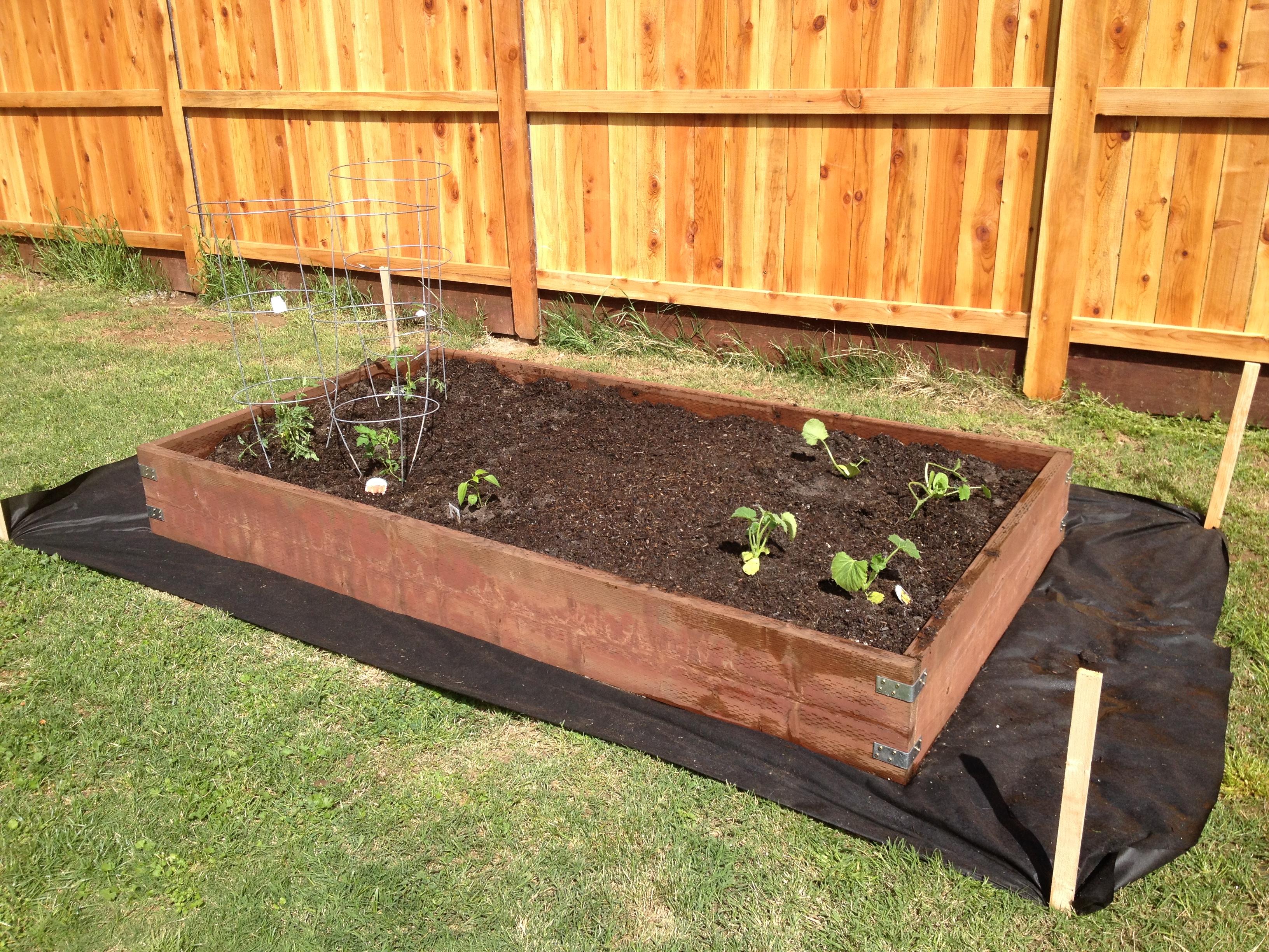 vegetable garden box ideas photo - 6