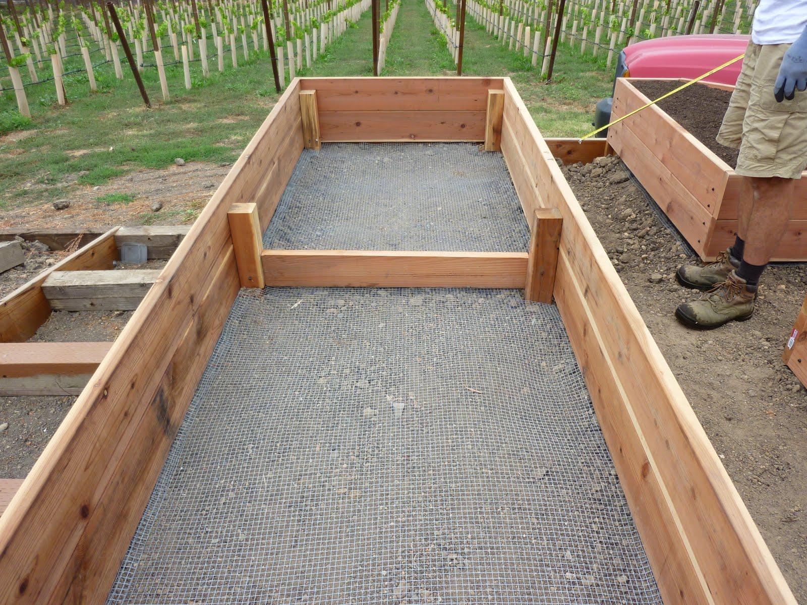 Vegetable Garden Box Ideas Photo   7