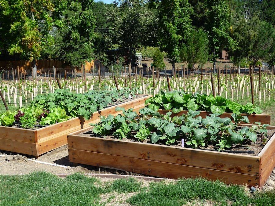 vegetable garden box ideas photo - 8