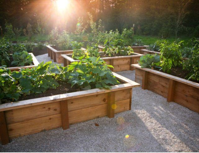 vegetable garden box ideas photo - 9