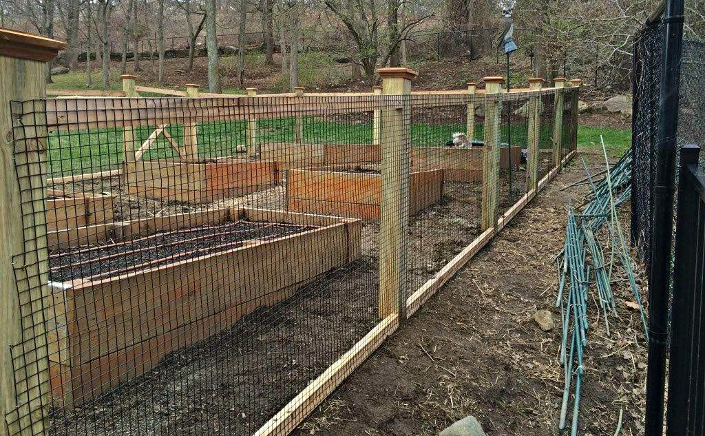 vegetable garden chain link fence photo - 10