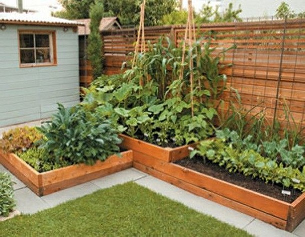 vegetable garden design ideas backyard photo - 6 - Vegetable Garden Design Ideas Backyard Hawk Haven