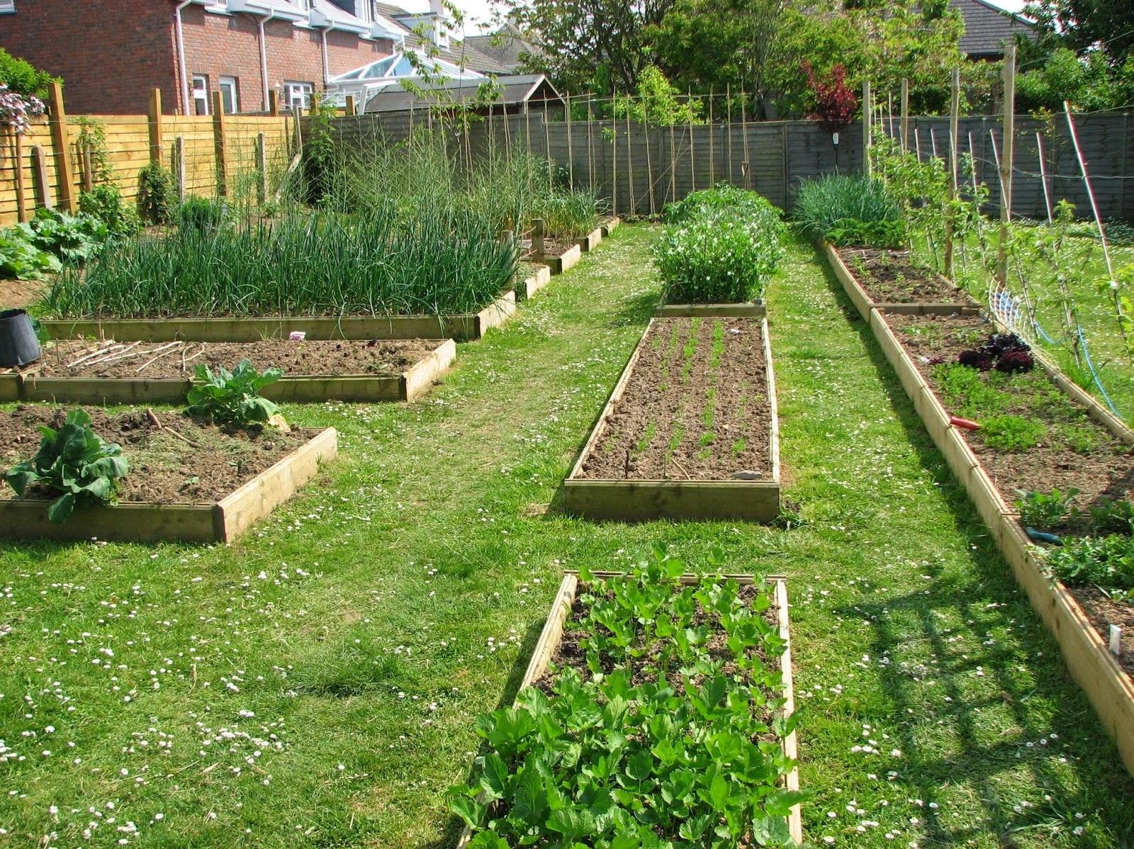 vegetable garden design ideas backyard photo - 9