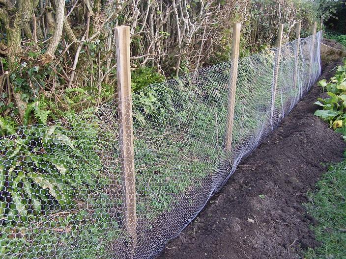 Vegetable Garden Fence Chicken Wire