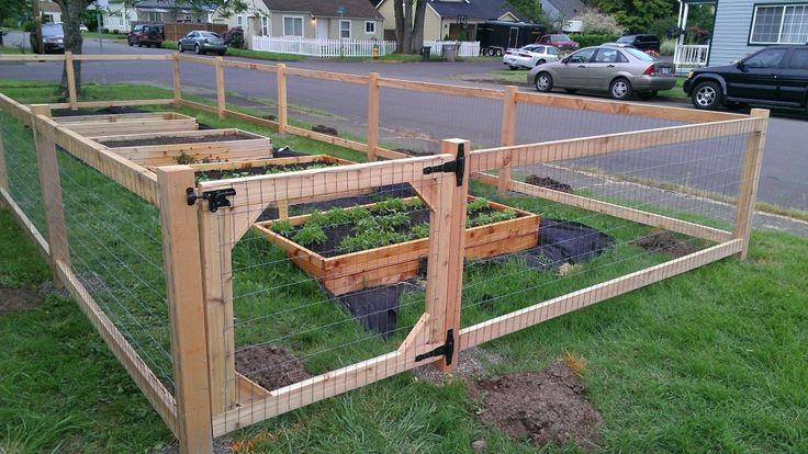 vegetable garden fence chicken wire photo - 10