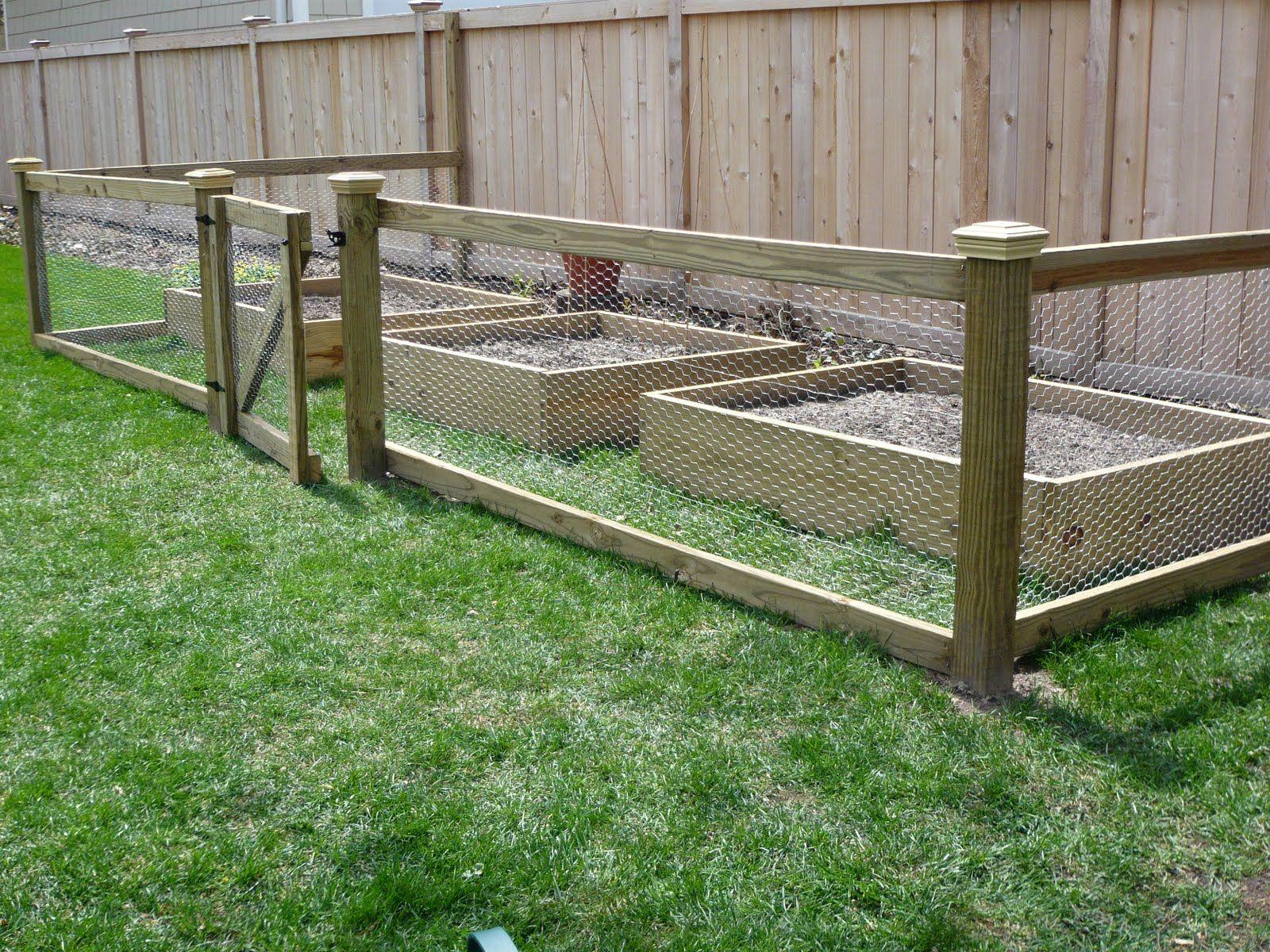 vegetable garden fence chicken wire photo - 4