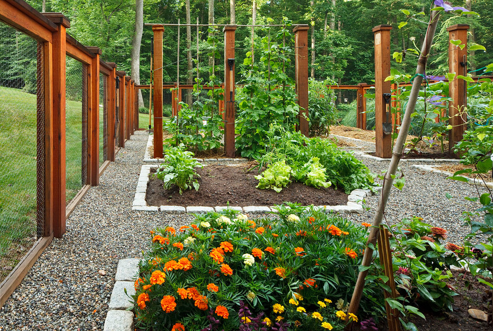 vegetable garden fence chicken wire photo - 5