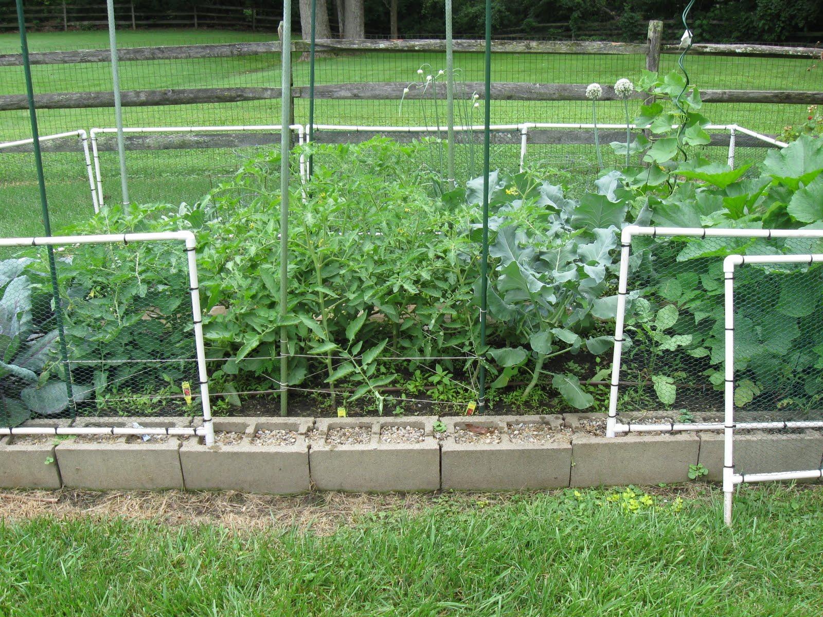 vegetable garden fence chicken wire photo - 6