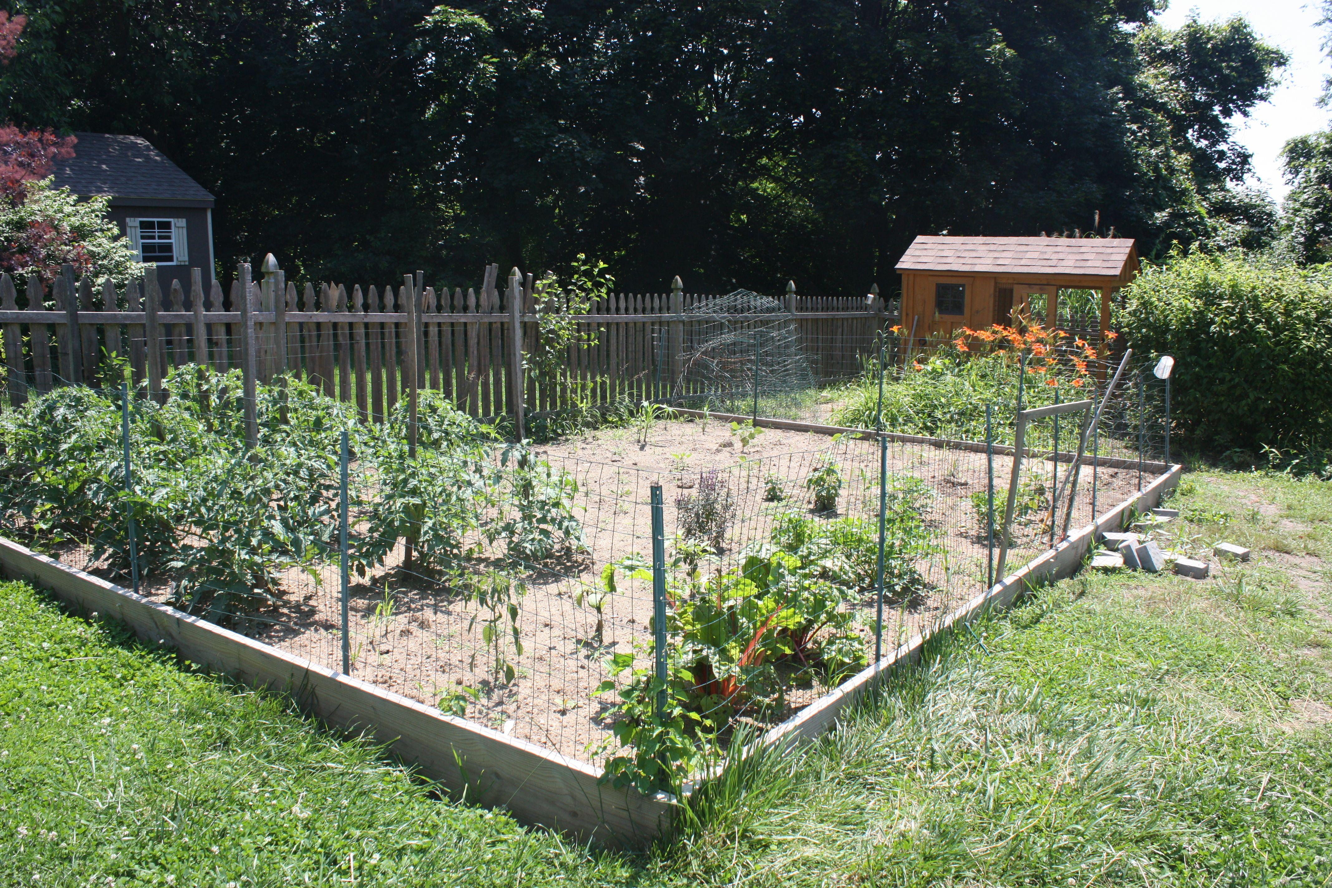vegetable garden fence chicken wire photo - 7