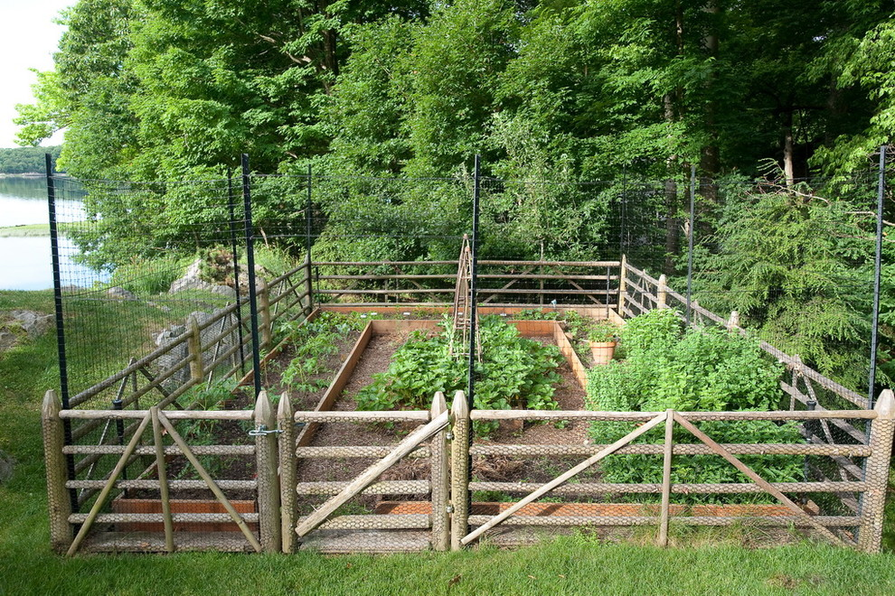 vegetable garden fence height photo - 10
