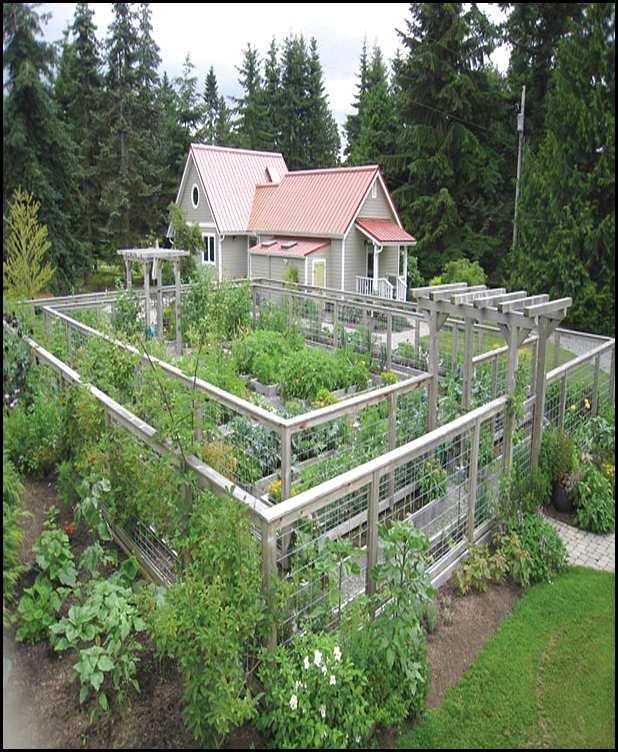 vegetable garden fence height photo - 3