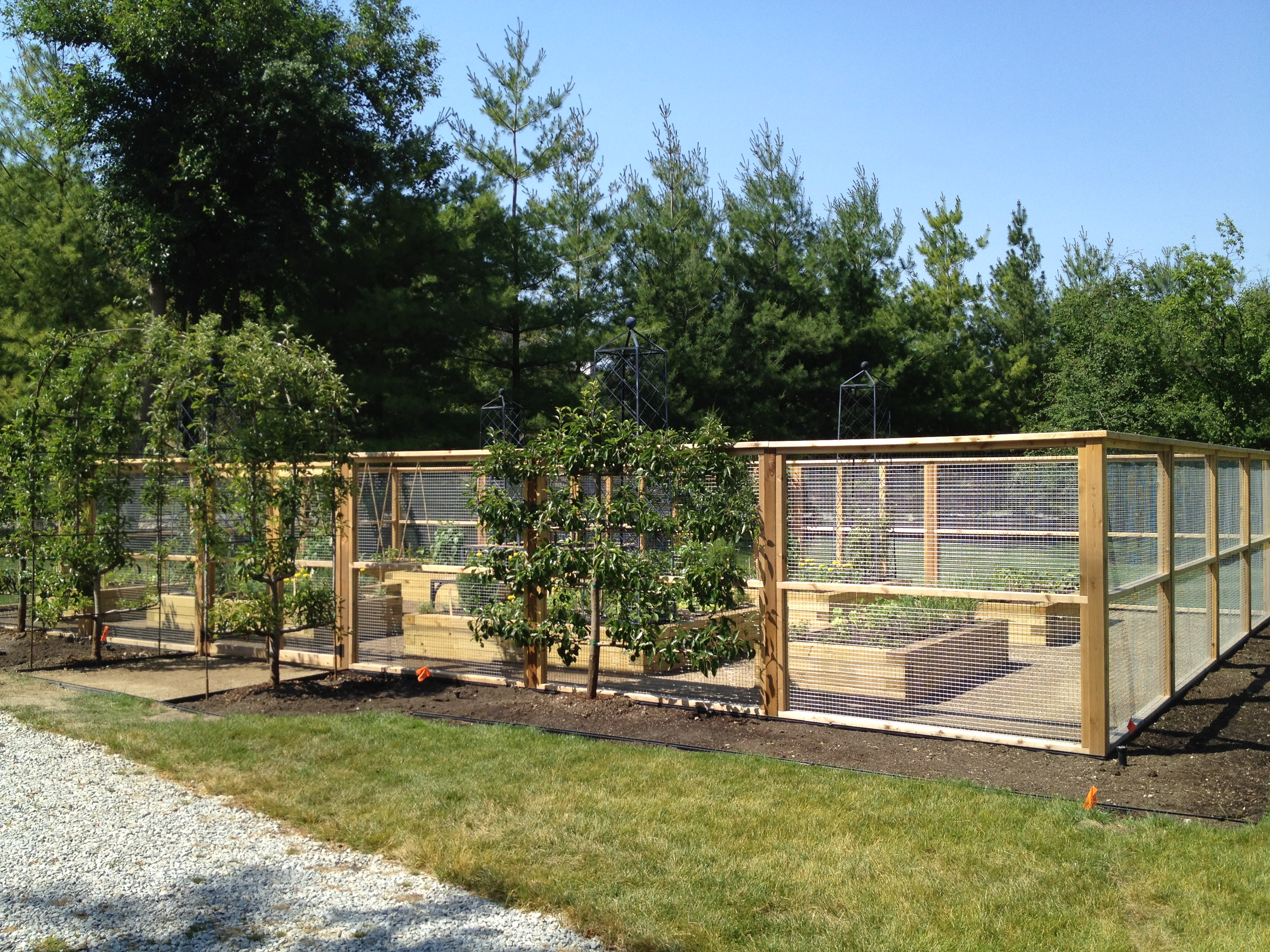 vegetable garden fence height photo - 4