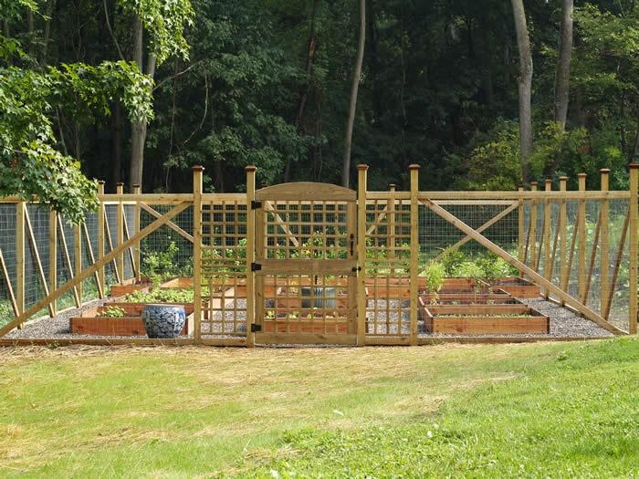 vegetable garden fence height photo - 5