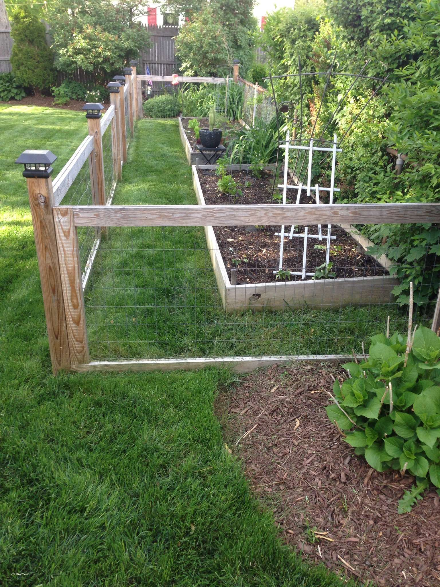 vegetable garden fence height photo - 6