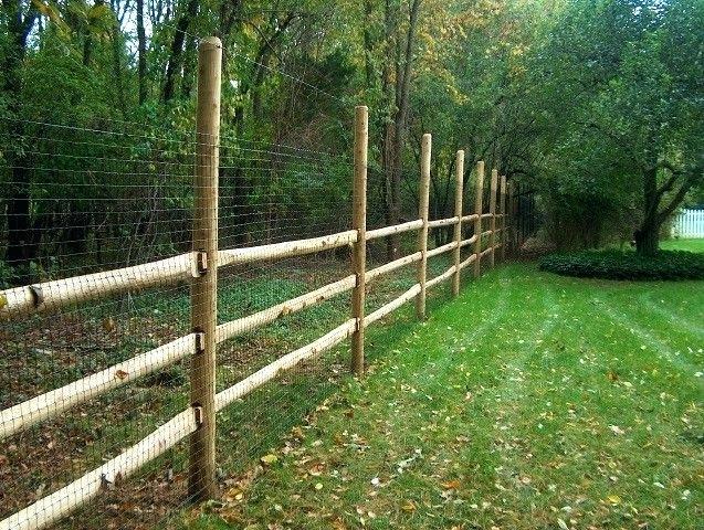 vegetable garden fence height photo - 7