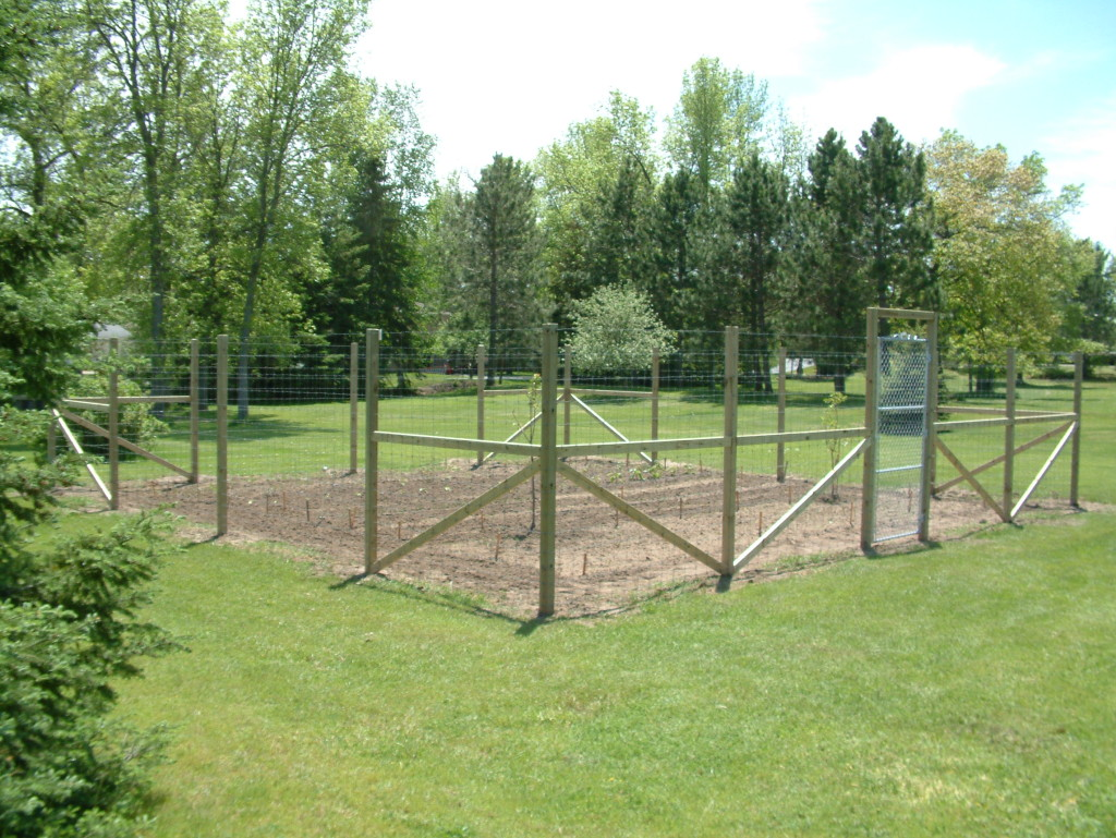 vegetable garden fence height photo - 9