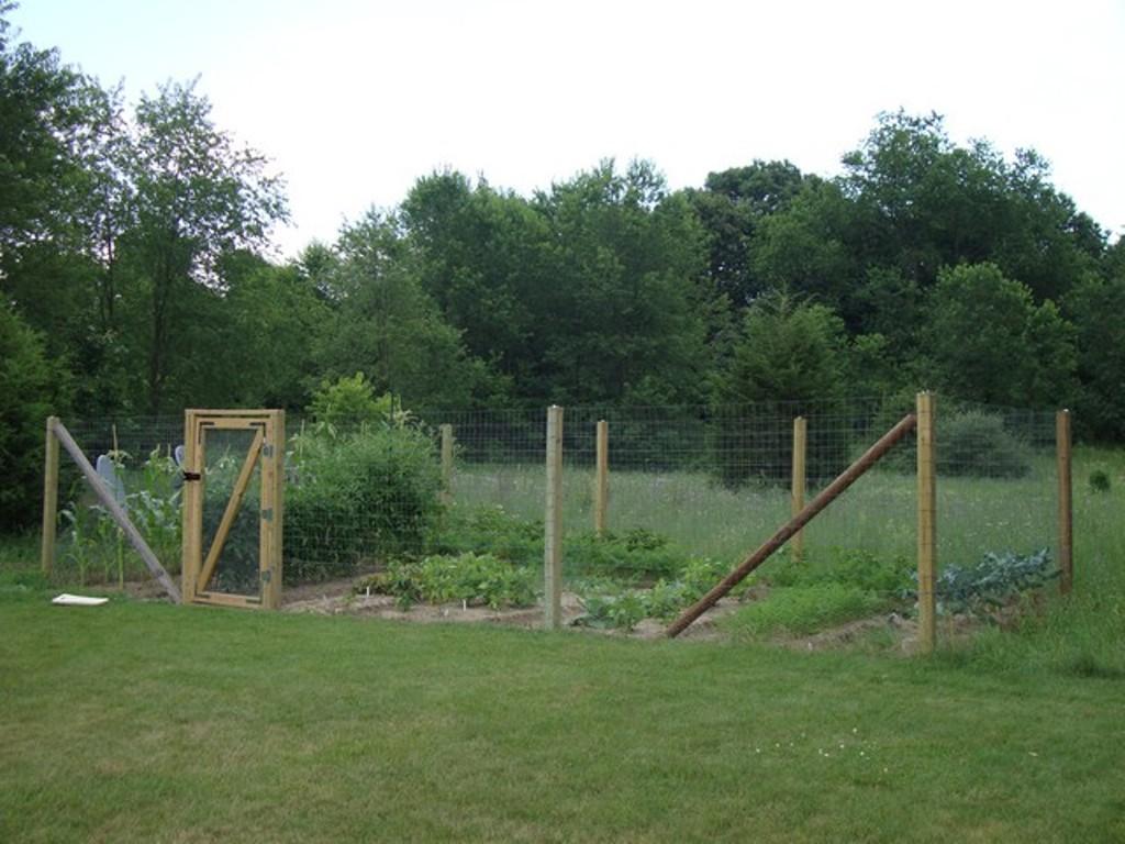 vegetable garden fence posts photo - 5
