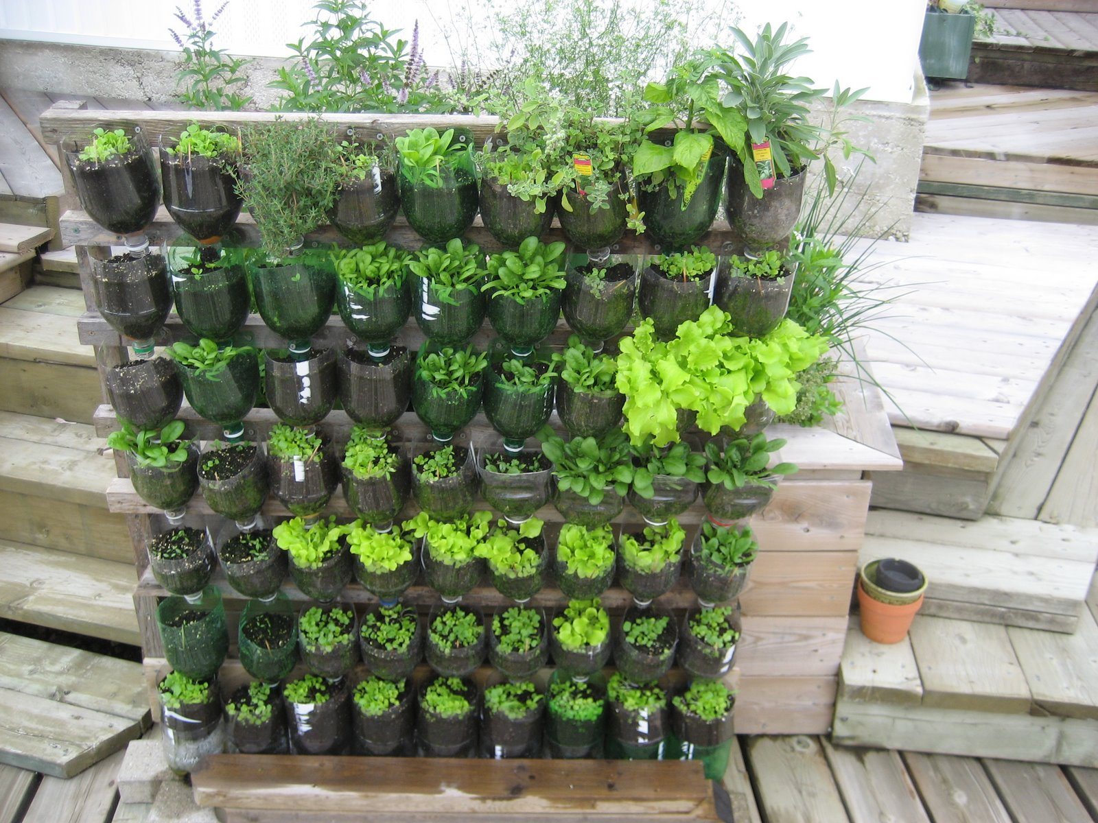 Vegetable garden ideas | Hawk Haven
