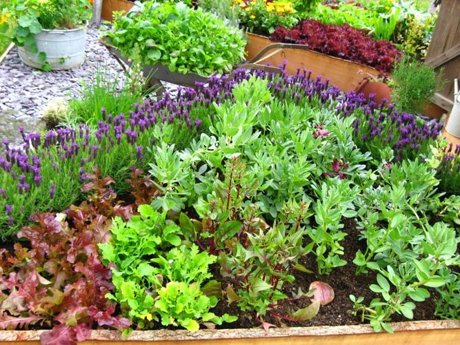 vegetable garden ideas photo - 10