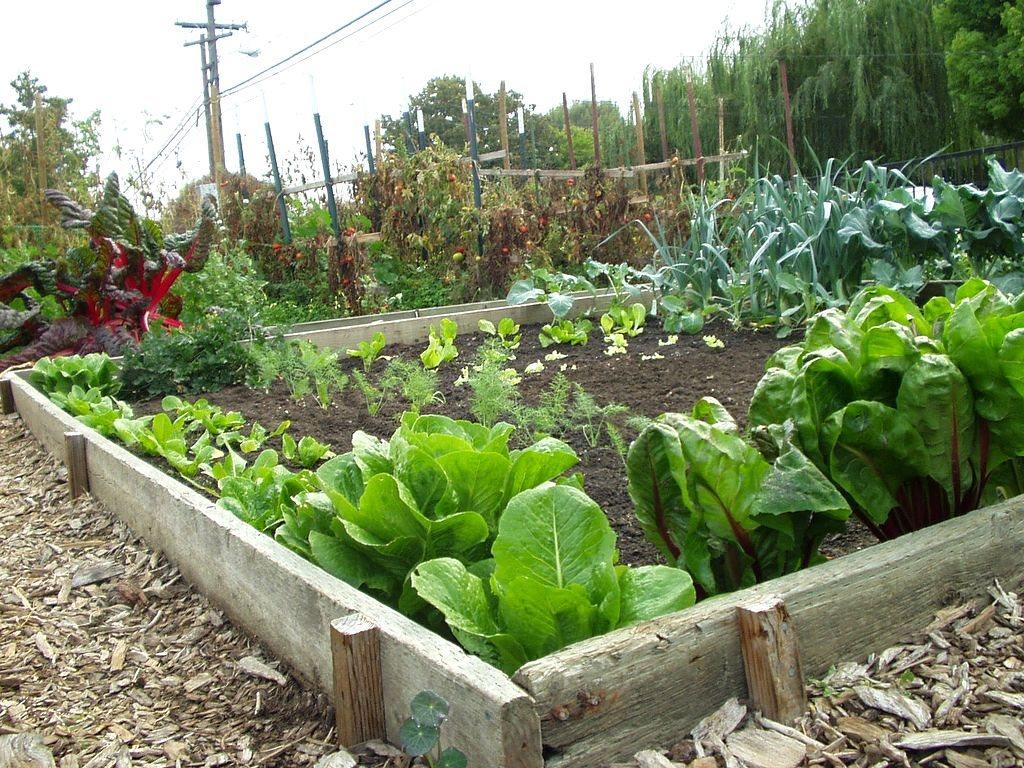 vegetable garden ideas photo - 2