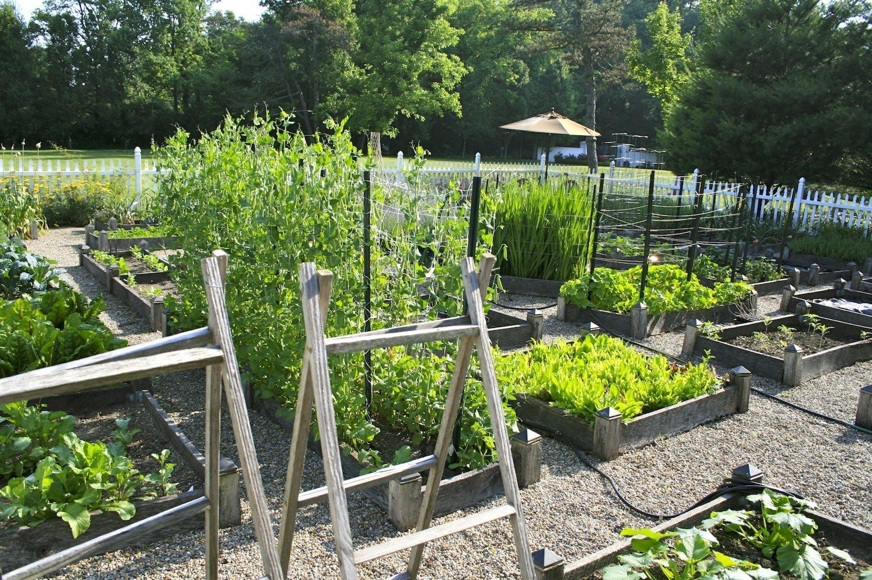 vegetable garden ideas photo - 4