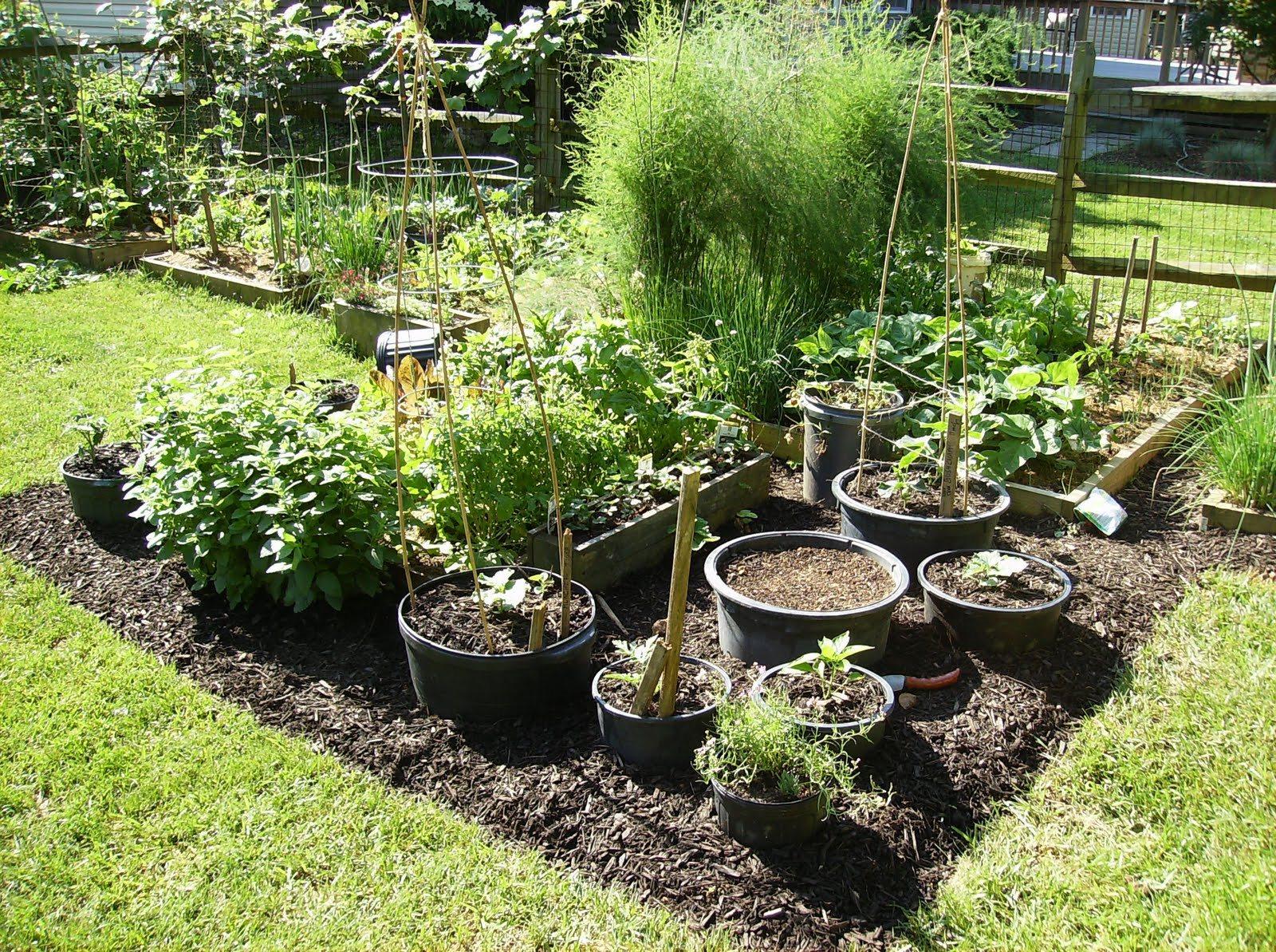 vegetable garden ideas photo - 7