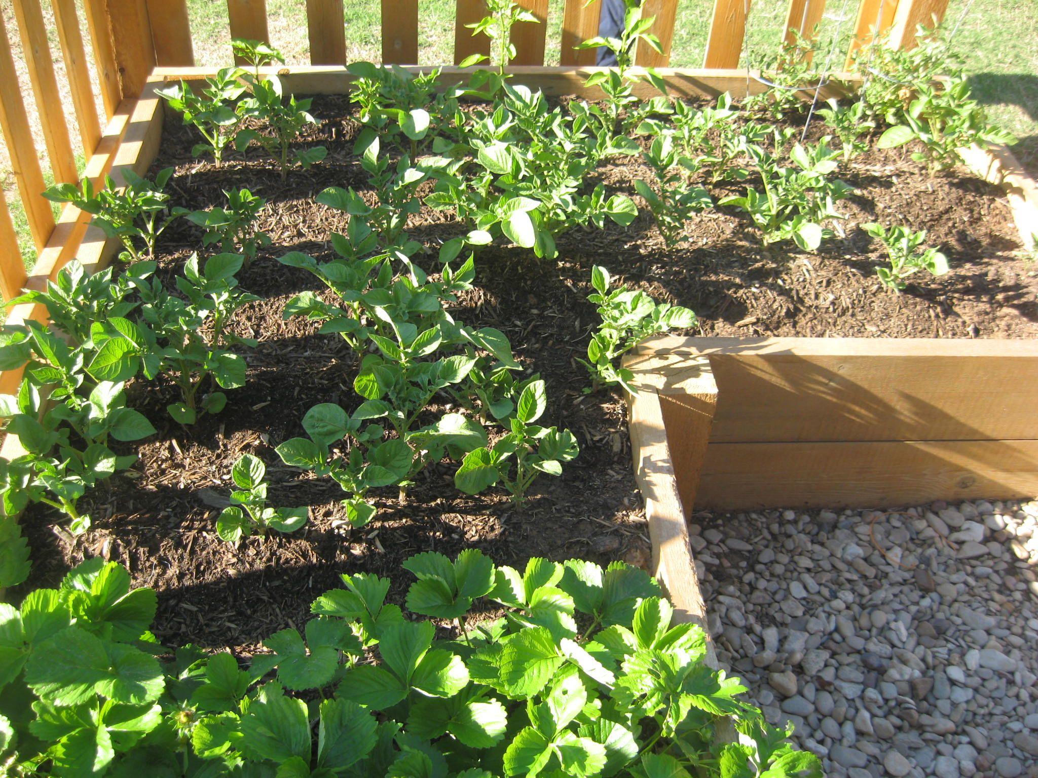 vegetable garden ideas photo - 9