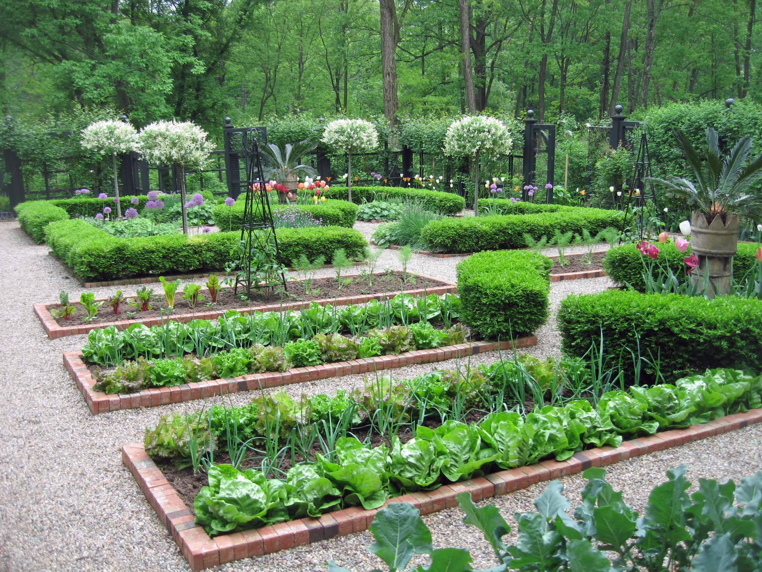 vegetable garden plans photo - 4