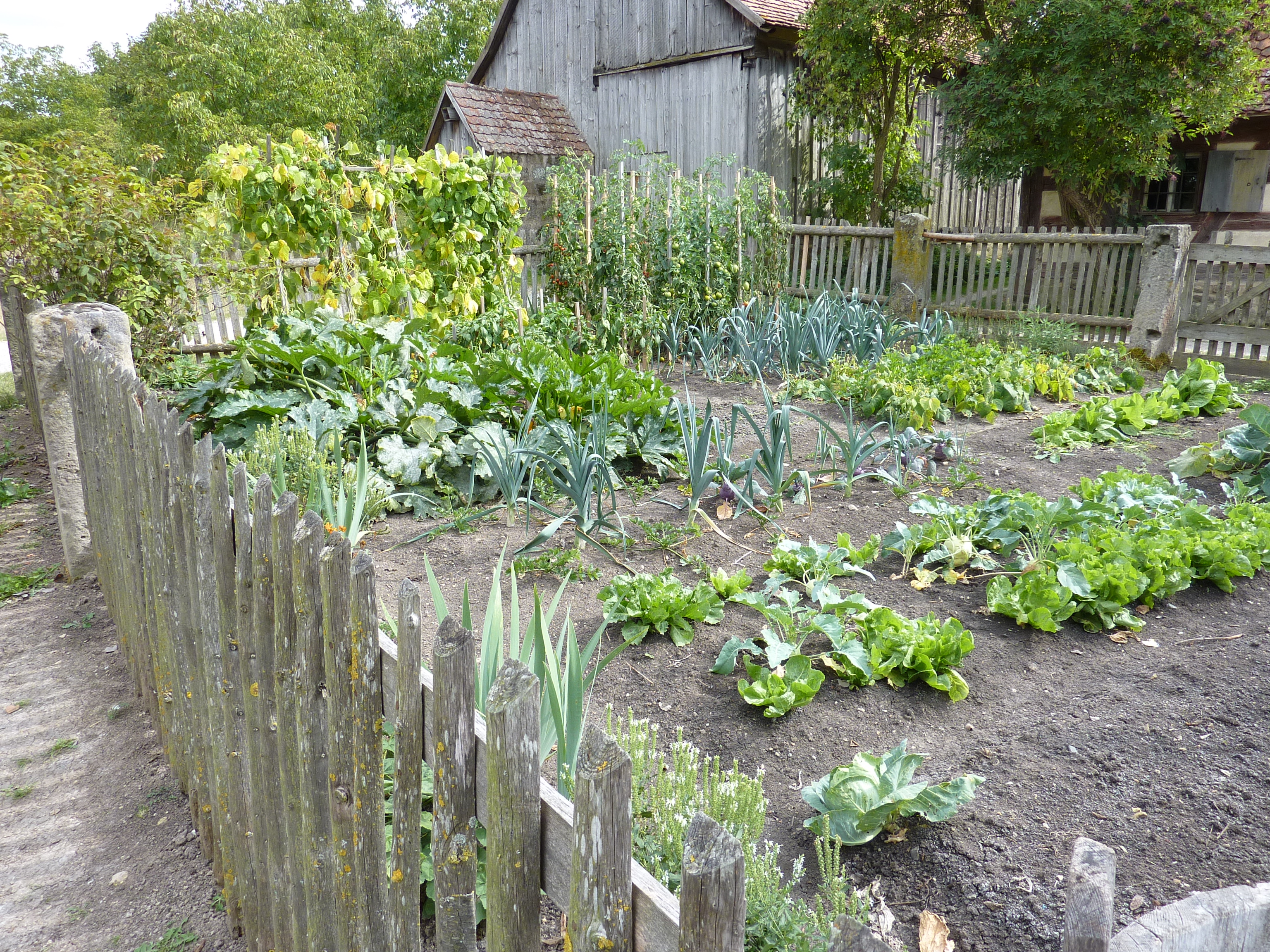 vegetable garden plans photo - 7