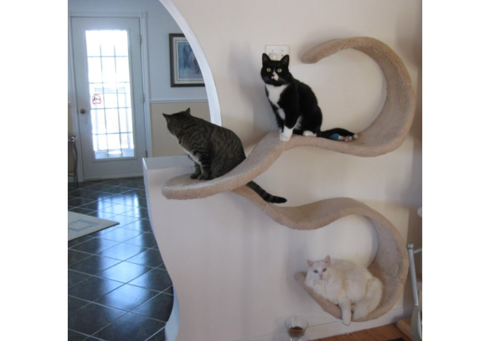 wall mounted shelves for cats photo - 2